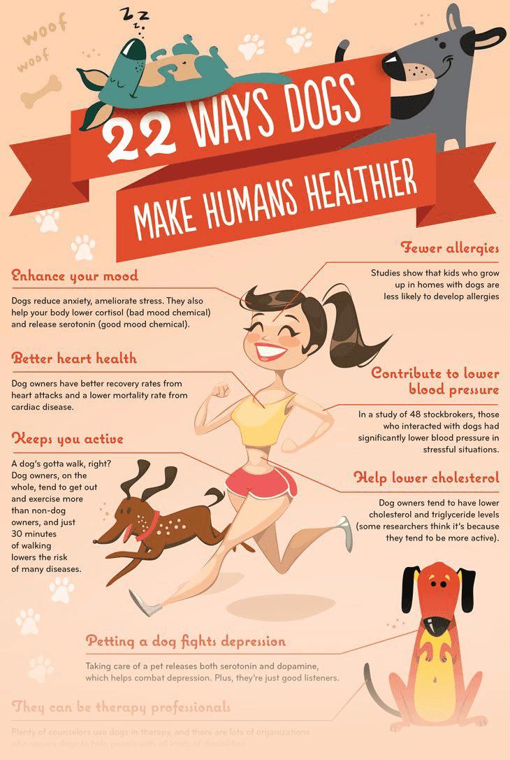 22 cách chó làm cho con người khỏe mạnh hơn - Top trang 1